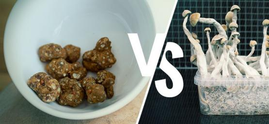 Find Out How Magic Truffles Differ From Magic Mushrooms